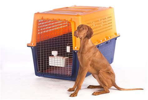 Pet Travel Crate Hire - Airline Approved | Jetpets AU